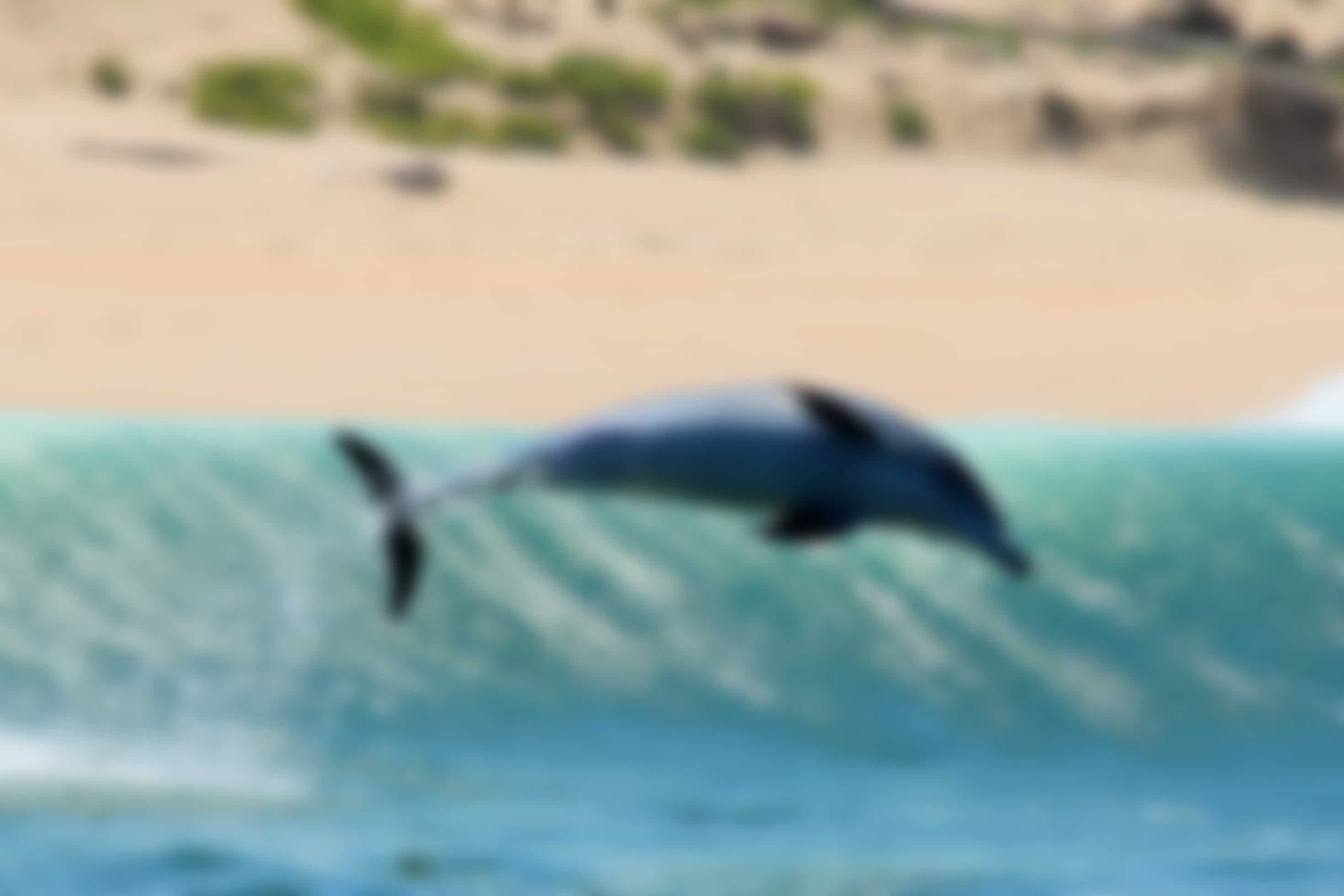 Zeedieren zoals dolfijnen en walvissen helpen in Zuid-Afrika