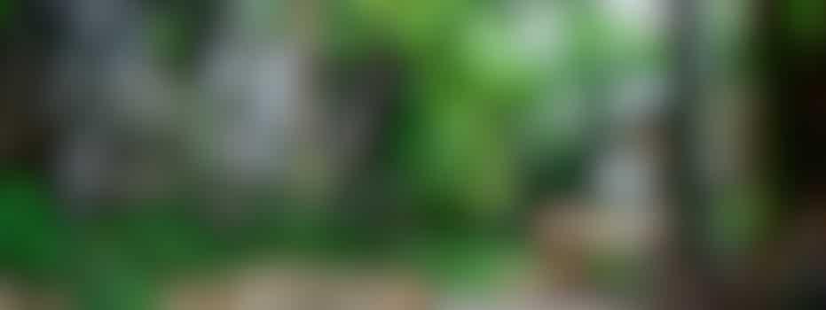 Tuin opknappen bij vrouw van 85