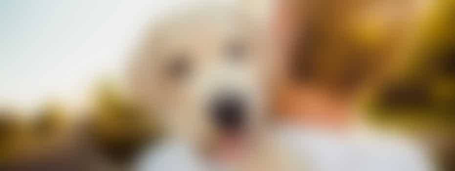 Gastgezin voor honden