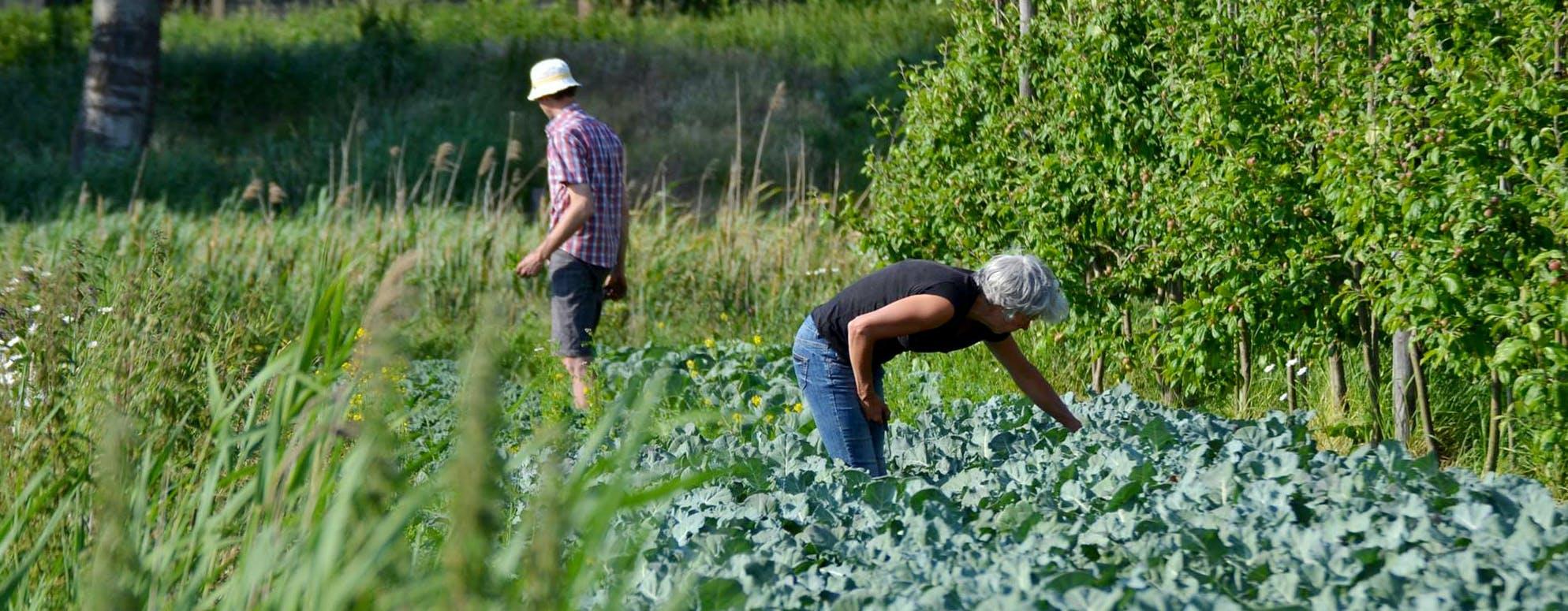 H&M steekt handen uit de mouwen op de fruittuinen van PLUK!