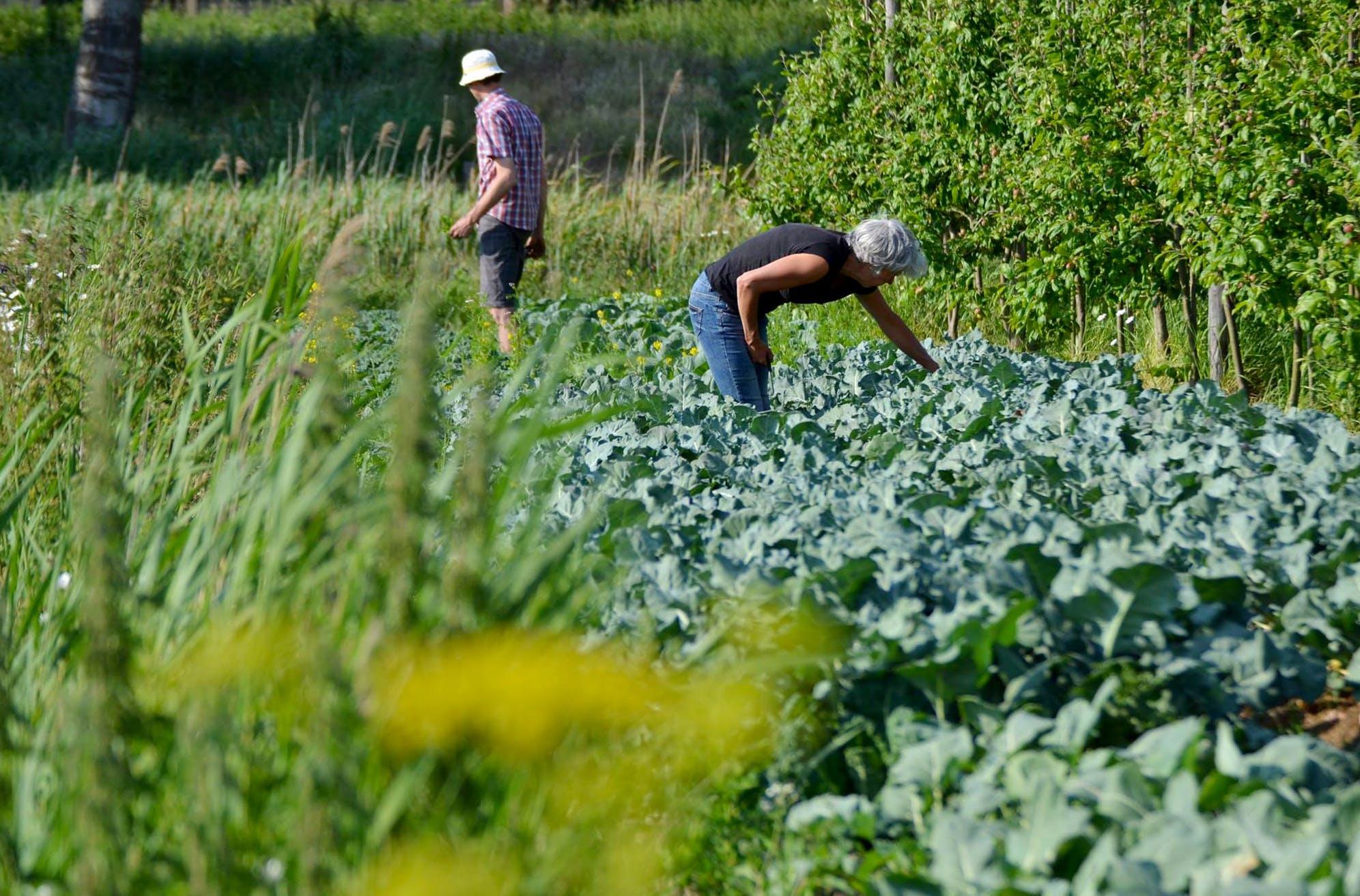 Bouwinvest komt helpen in de tuinen van PLUK!