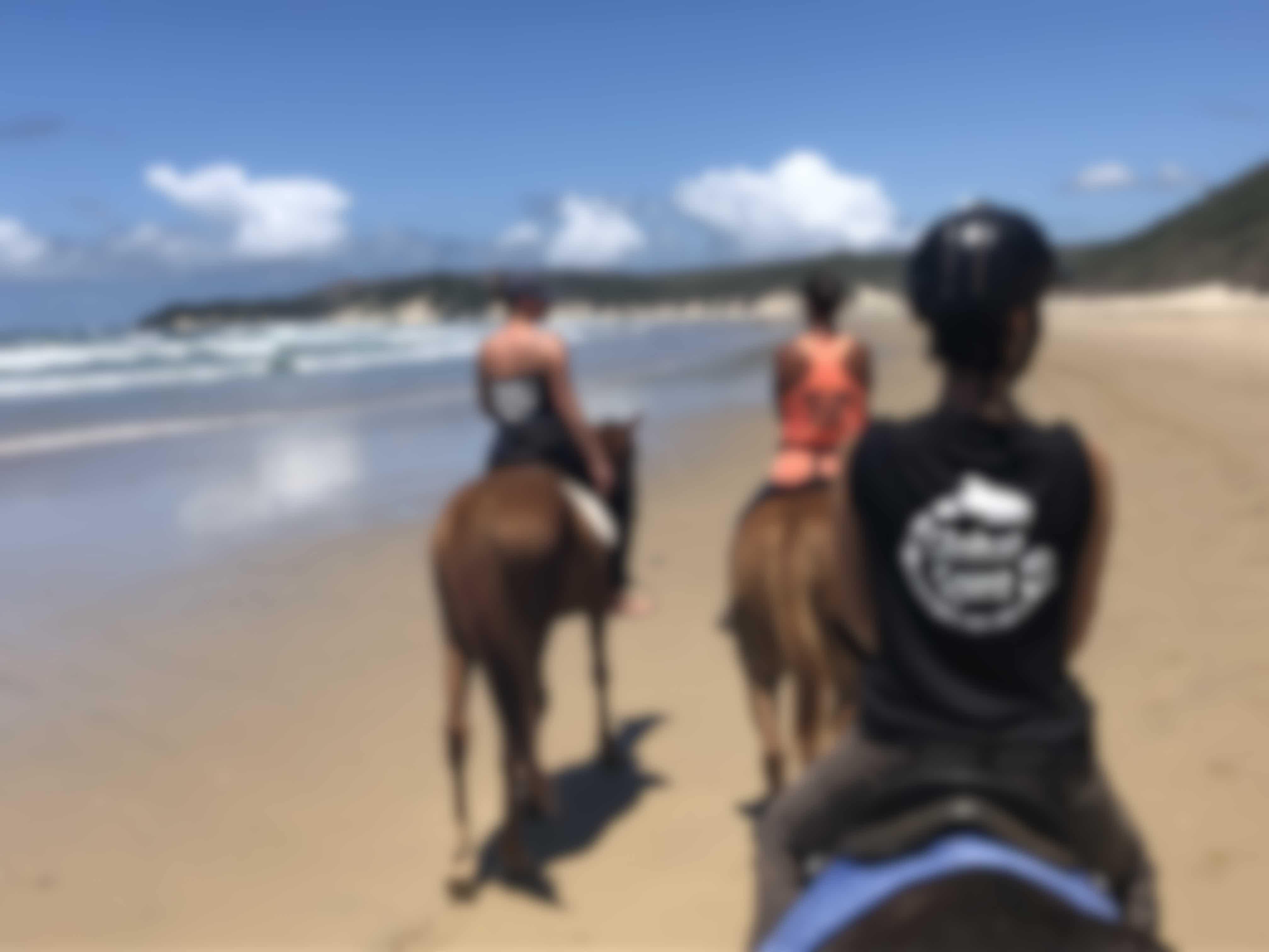 Paarden helpen in Zuid-Afrika