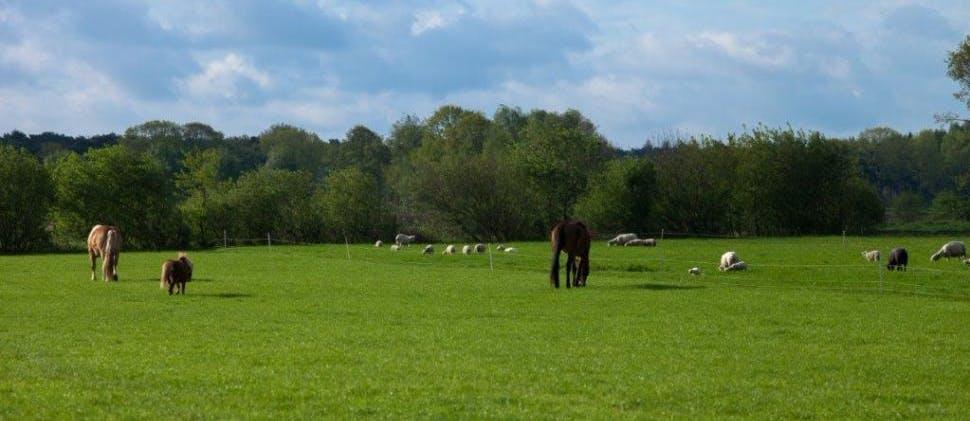Zorgboerderij Weidezicht