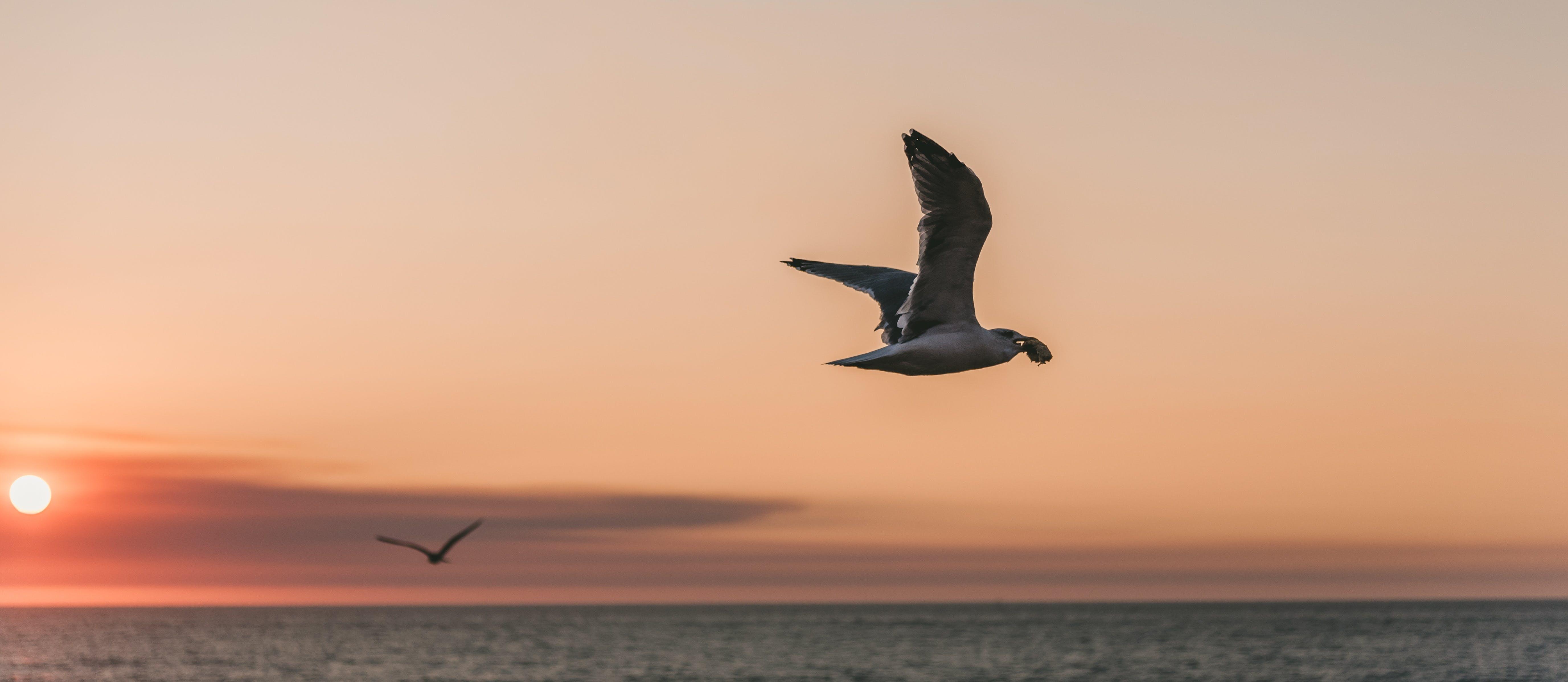 Vogelbescherming Den Helder