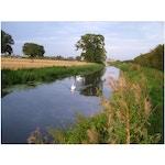 Coranvirus help Creech, Monkton Heathfield and surrounding