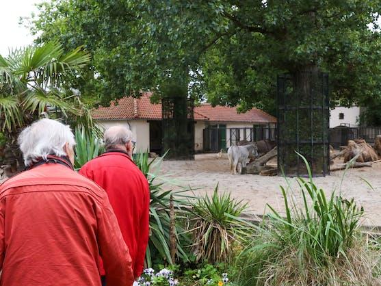 elderly people at ARTIS zoo
