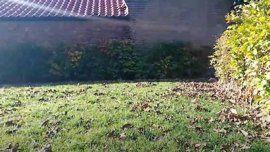 Hoekje in de tuin met veel bladeren